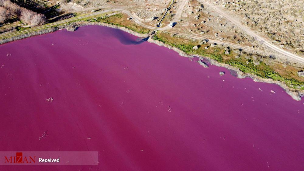 دریاچهای با رنگ صورتی - آرژانتین