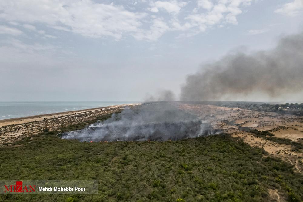 آتش سوزی سریالی در میانکاله