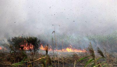 اعزام هواپیما برای خاموش کردن آتش تالاب انزلی