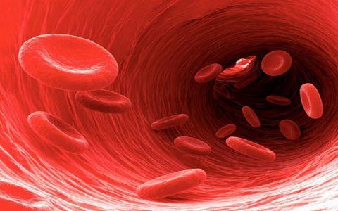 بهترین خوراکیها برای درمان کم خونی