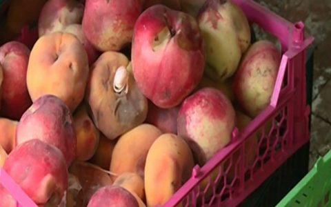 ساعت کار میادین میوه و ترهبار تهران در نیمه دوم سال اعلام شد
