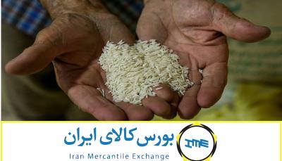 آیا عرضه برنج در بورس کالا به نفع تولیدکننده و مصرف کننده است؟