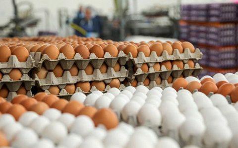 قیمت هر شانه تخم مرغ به ۳۵ هزار تومان رسید