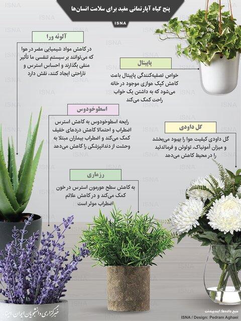 پنج گیاه آپارتمانی مفید برای سلامتی /اینفوگرافیک