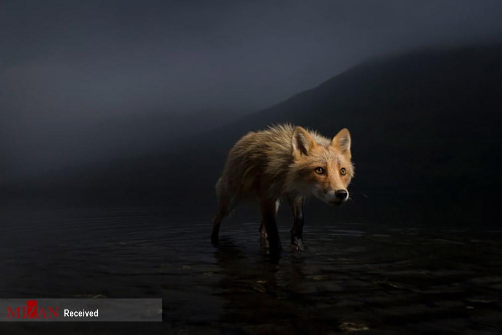 مسابقه عکاسی حیات وحش ۲۰۲۱