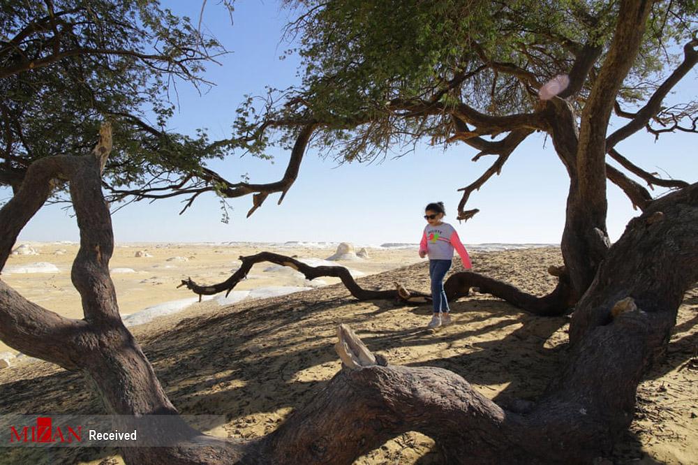 صحرای سفید در مصر