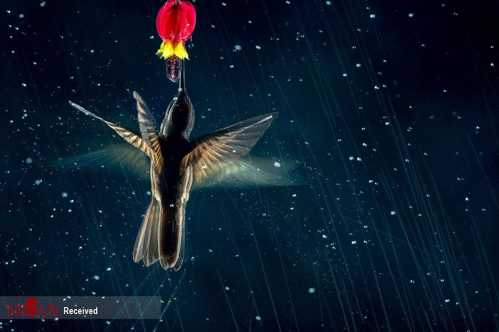 مسابقه عکاسی پرنده -۲۰۲۱