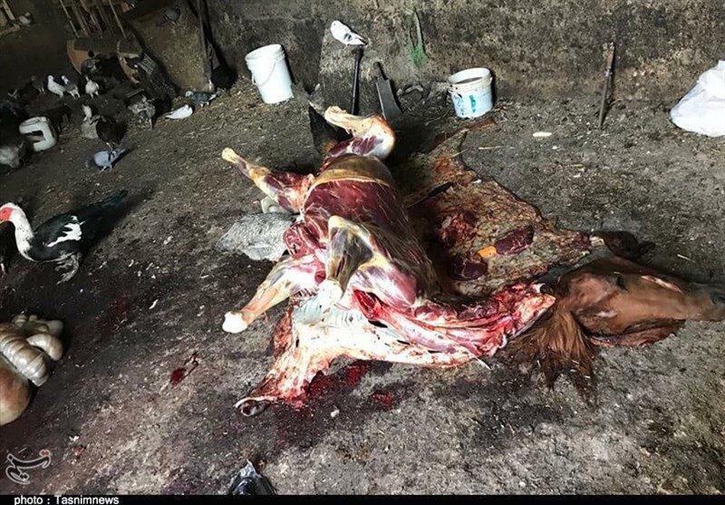بازداشت عامل ذبح و توزیع گوشت الاغ و اسب در تهران/تصاویر