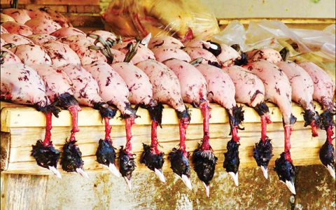 بازگشت دوباره مهاجران به بازار فروش پرندگان فریدونکنار