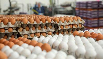 چشم بازار به تخم مرغ 2هزار 500 تومانی روشن شد/ وقتی تخم مرغ هم برای نیازمندان دست نیافتنی میشود