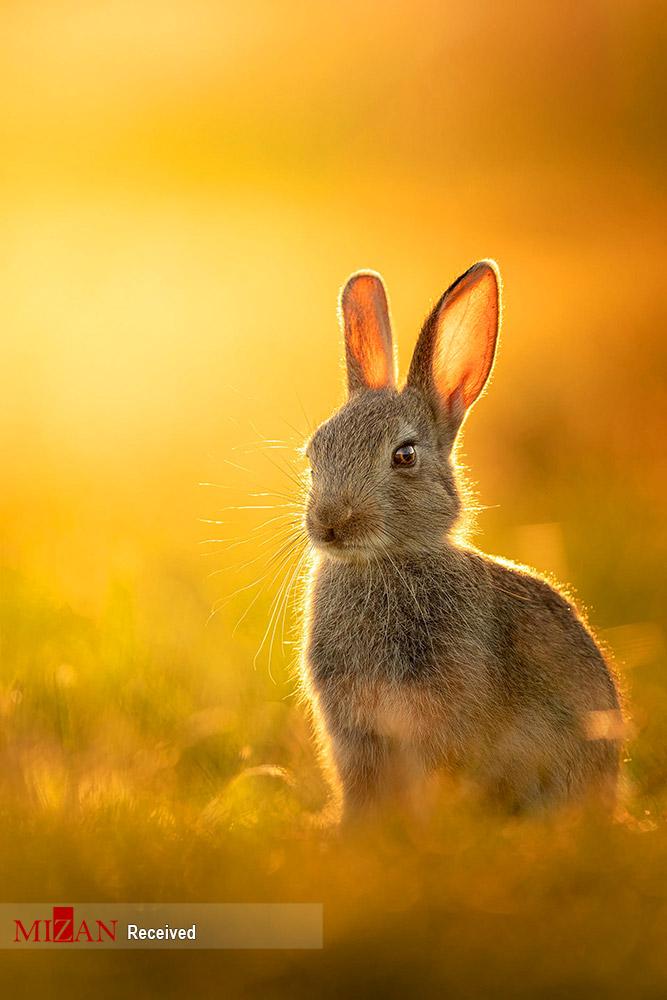 عکسهای برگزیده هفته حیات وحش